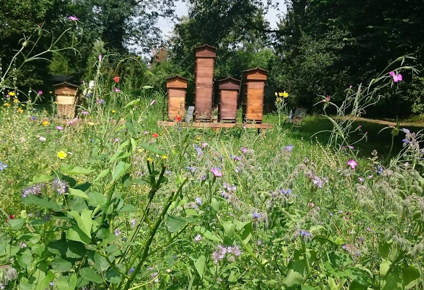 Blumenwiese Anlegen blumenwiese anlegen summende gärten