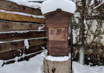Was machen Honigbienen im Winter