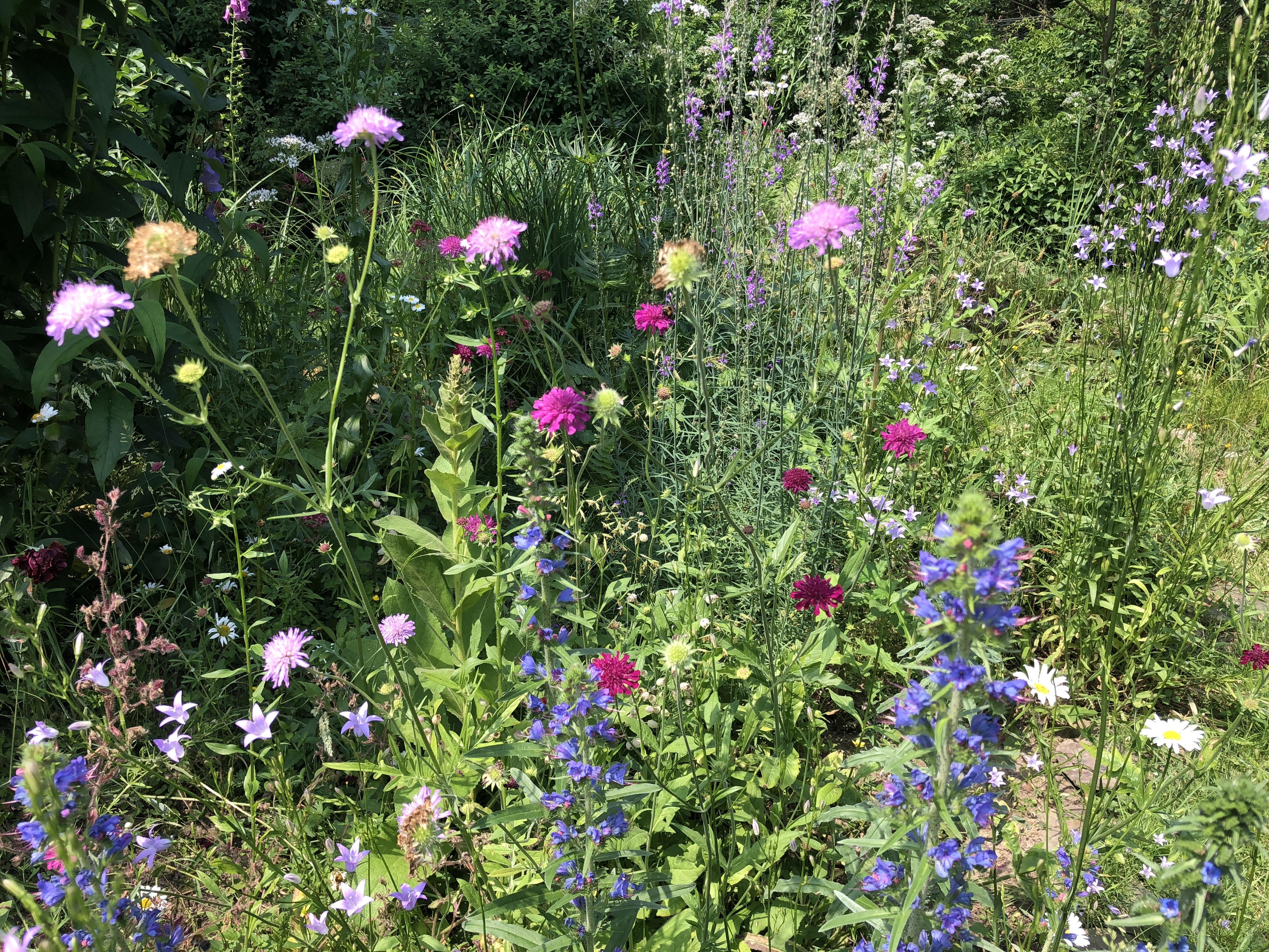Staudenbeet Summende Garten